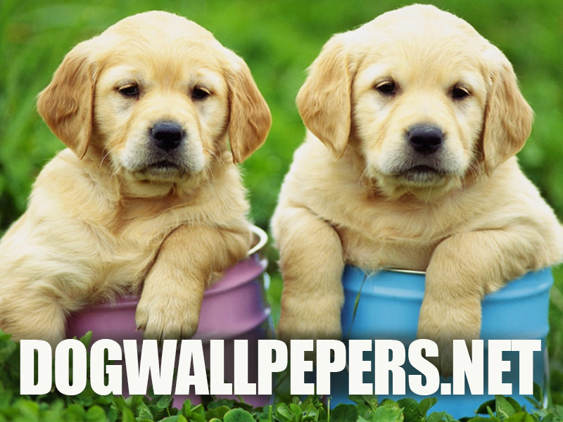 Dogwallpapers